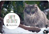 alley-cat-gray-happy-189