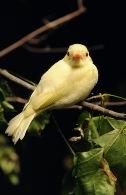 awc-albino-phoebe-195