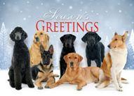 americas-vet-dogs-group-189