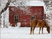 casa-nh-horse-in-snow-188