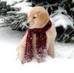 Canine Companions for Independence Holiday eCard