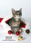 Michigan Humane Society Holiday eCard