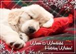 Idaho Humane Society Holiday eCard Puppy