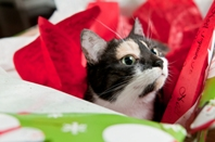 Butte-Cat-in-Wrapping-2013.198