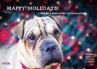 animal-rescue-boston-dog-2016-190