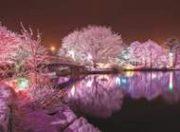 canadian-cancer-winter-lights-188